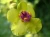 Blüten - www.KÖRPERBEHANDLUNGEN.at