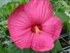 Blüte - www.KÖRPERBEHANDLUNGEN.at