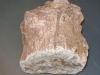 Fossil - www.KÖRPERBEHANDLUNGEN.at