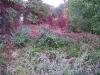 Natur - www.KÖRPERBEHANDLUNGEN.at