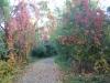 www.KÖRPERBEHANDLUNGEN.at - Natur