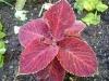 Pflanzen - www.KÖRPERBEHANDLUNGEN.at