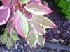 www.KOERPERBEHANDLUNGEN .at - Pflanzen