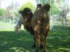 Tiere - www.KÖRPERBEHANDLUNGEN.at