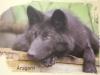Wolf - KÖRPERBEHANDLUNGEN.at